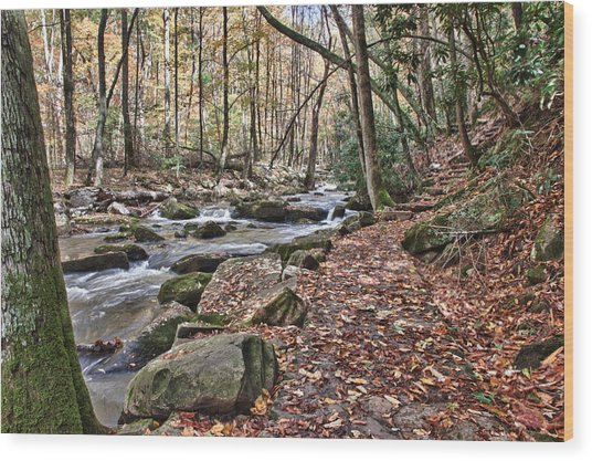 Hiking Trail To Cascade Falls Wood Print