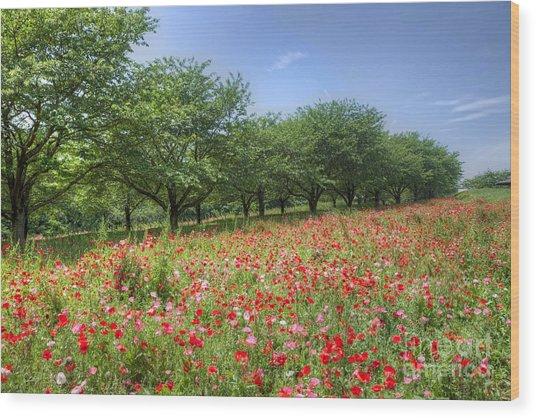 Hill Where A Poppy Bloom Wood Print by Tad Kanazaki