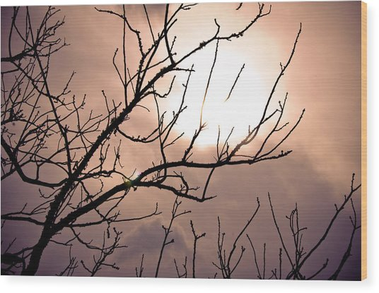 Hindered Sunset Wood Print by Victoria Lawrence