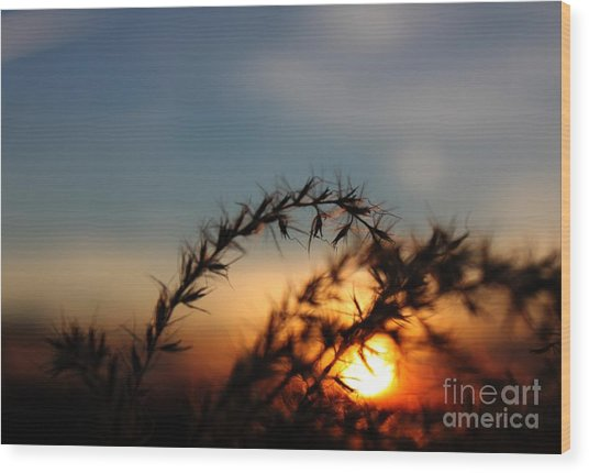 Hold On To The Sun Wood Print by Erica Hanel