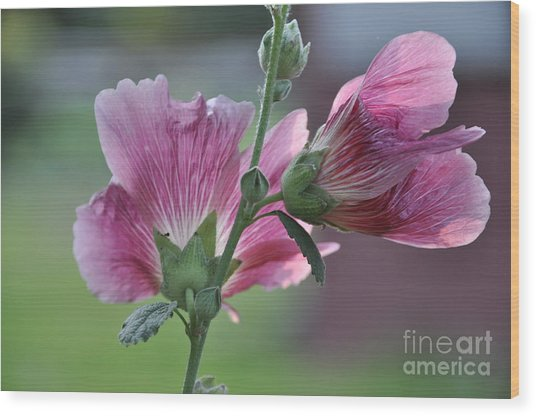 Hollyhocks Wood Print by Tamera James
