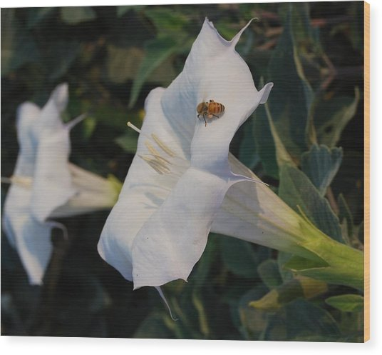 Honey Bee's Delight Wood Print