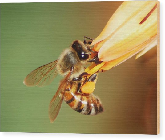 Hooked Bee Wood Print by Meeli Sonn