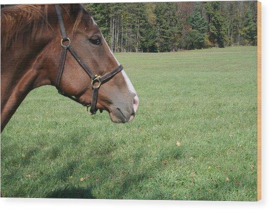 Horse-1 Wood Print