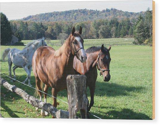 Horse-3 Wood Print