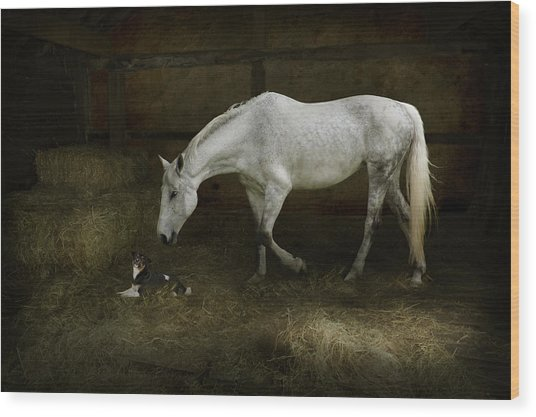 Horse And Puppy In Stable Wood Print