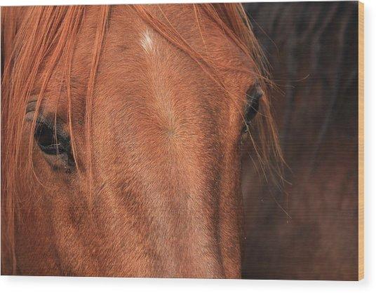 Horse Hide Wood Print
