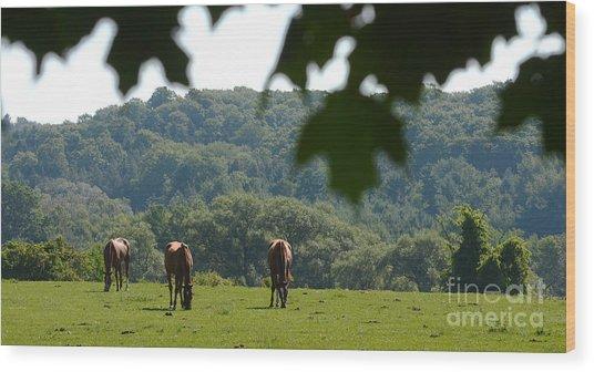 Horses And Summer Breeze Wood Print