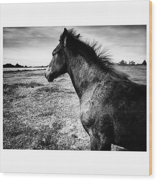 #horses #horse #pony #ponies #foal Wood Print by Little Images