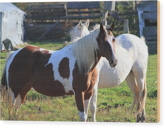 Horses Wood Print by Mike Stouffer