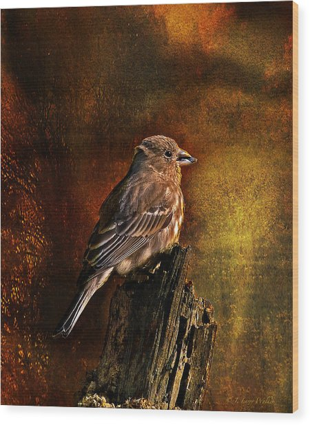 House Finch With Sunflower Seed Wood Print