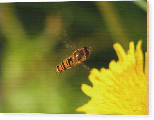 Hover Fly Wood Print