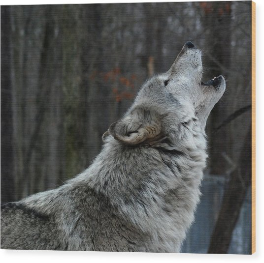 Howling Tundra Wolf Wood Print
