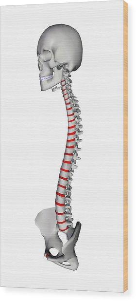Human Backbone, Artwork Wood Print by Friedrich Saurer
