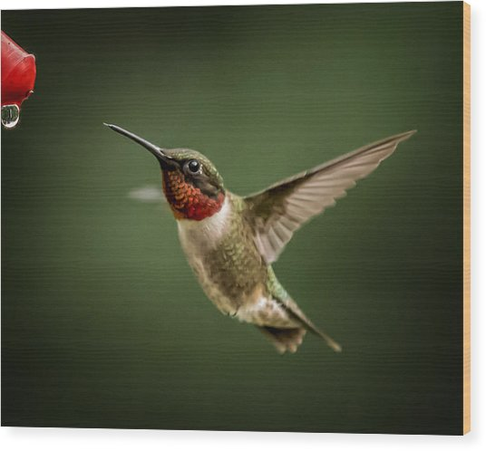 Hummer In The Garden One Wood Print by Michael Putnam