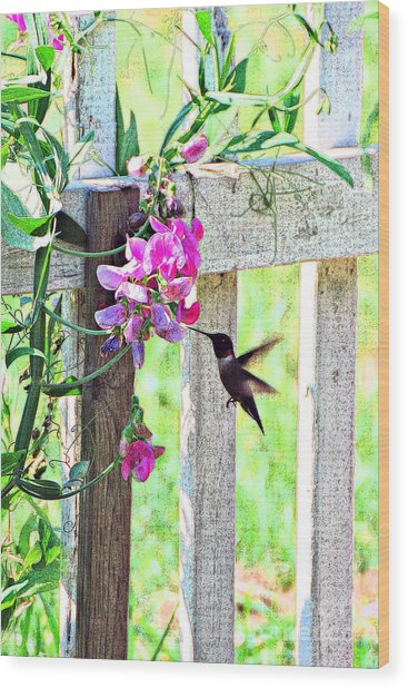 Humming Bird And Sweet Pea Wood Print