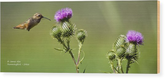 Hummingbird In Flight - Milkweed Thistle Wood Print