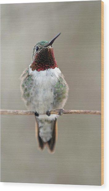 Hummingbird Wood Print by Juergen Roth