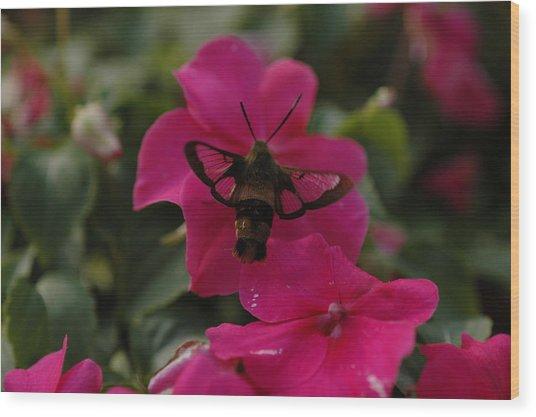 Hummingbird Moth Wood Print by Rafael Figueroa