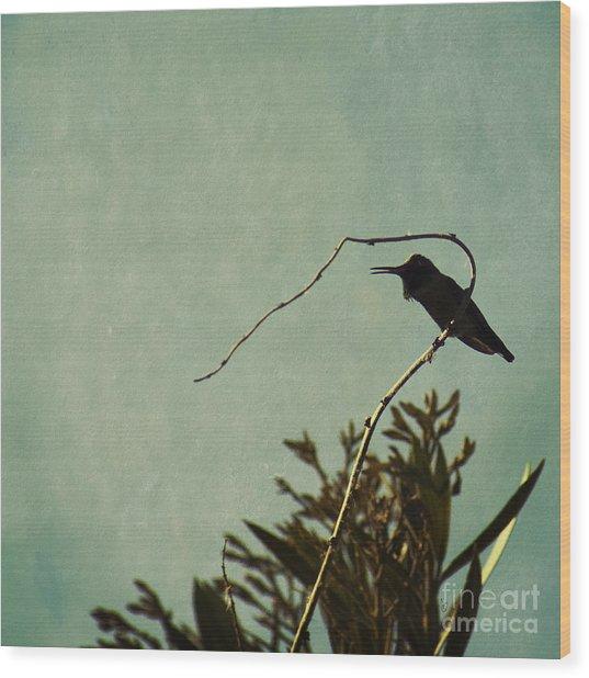 Hummingbird On Winter Wisteria Wood Print