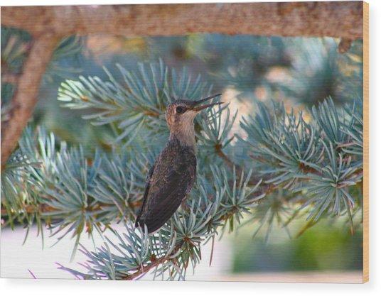 Hummingbird's First Flight Wood Print