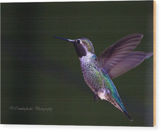Hummingbird's Visit Wood Print