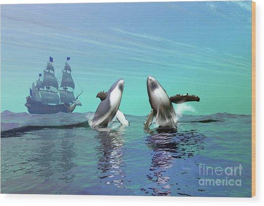 Humpback Whales Breach The Ocean Wood Print