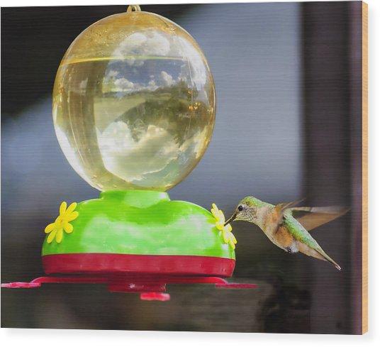 Hungry Hummingbird Wood Print by Sandra Welpman