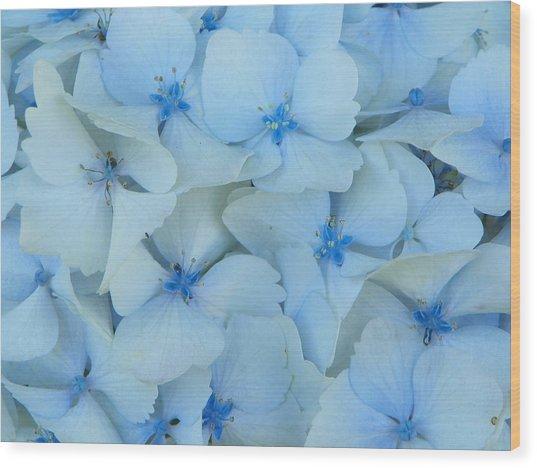 Hydrangeas Hortensias Wood Print