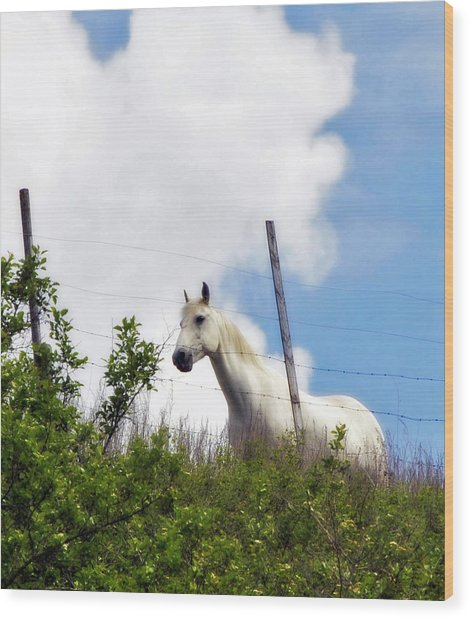 I Dreamt Of A White Horse Wood Print
