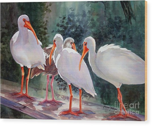 Ibis - Youngster Among Us. Wood Print
