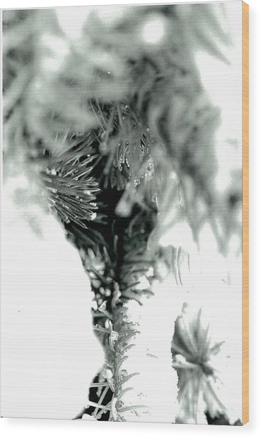 Iced Needles Buried In Snow Wood Print by Suzanne Fenster