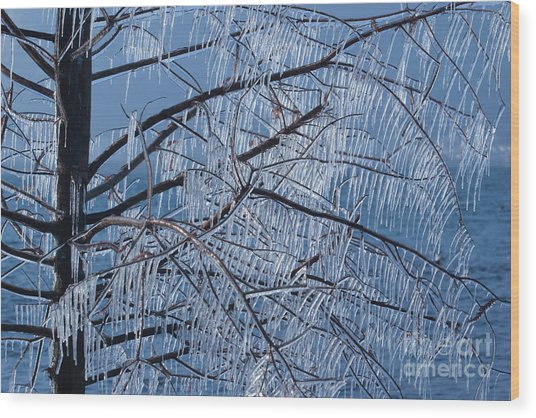 Icy Tree Wood Print