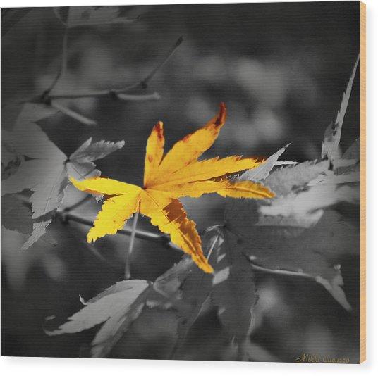 Illuminated Leaf Wood Print