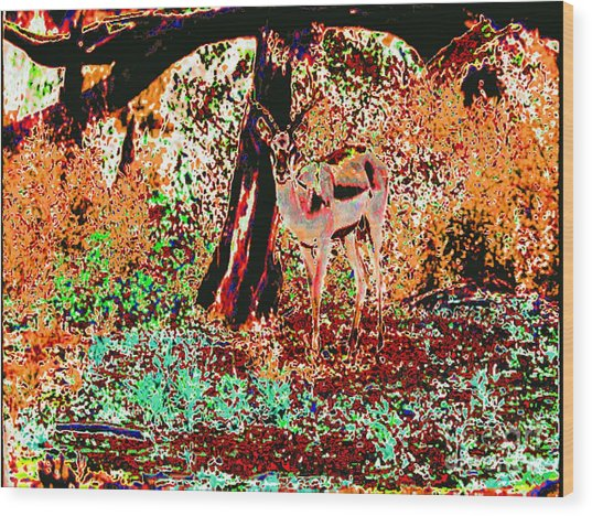 Impala In The Forest Wood Print