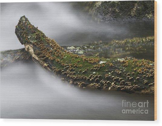 In The Flow Wood Print by David Waldrop