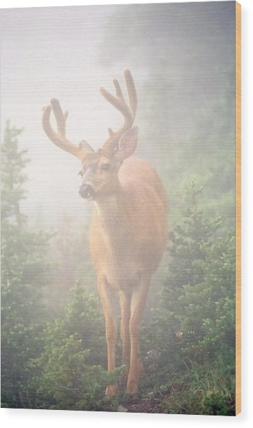 In The Mist Wood Print