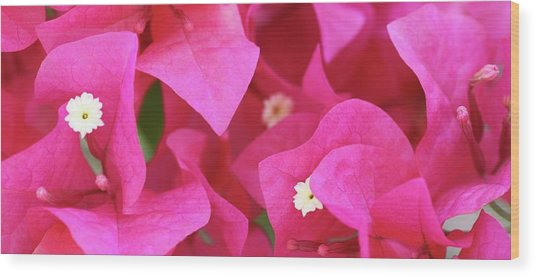 In The Pink Today Wood Print by Andrea  OConnell