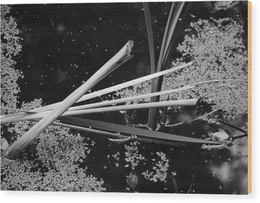 In The Pond Asian Influence Wood Print