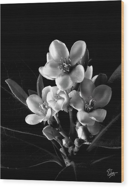 Indian Hawthorn In Black And White Wood Print