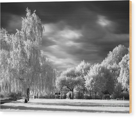 Infra Red Park Wood Print