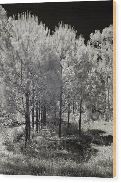 Infrared Trees Wood Print by Stavros Argyropoulos