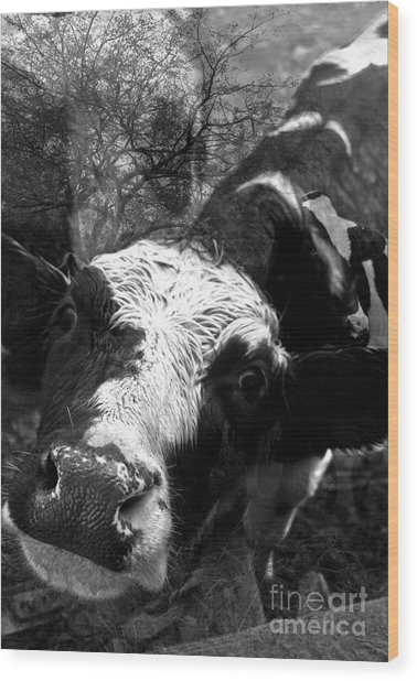 Inquisitive Zoey With Ellamay Wood Print