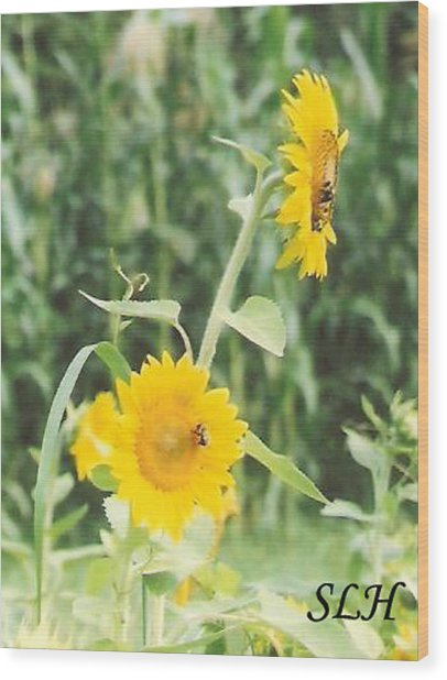 Insect On Sunflowers Wood Print
