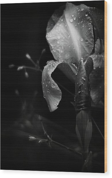 Iris Adorned Wood Print