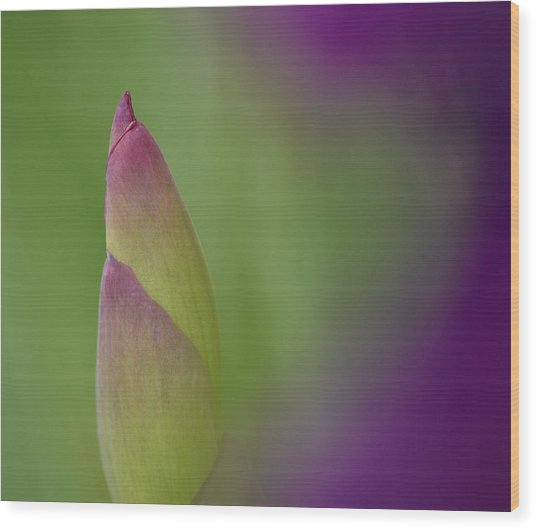 Iris-istible 1 Wood Print