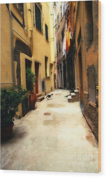 Italian Alley Kitty Wood Print by Virginia Furness
