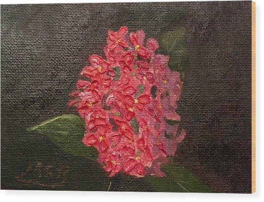 Ixora Bloom Wood Print by Maria Soto Robbins