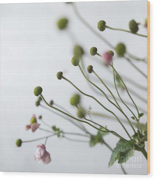 Japanese Anemones Wood Print by Ruby Hummersmith