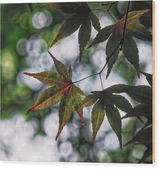 Japanese Maple Wood Print